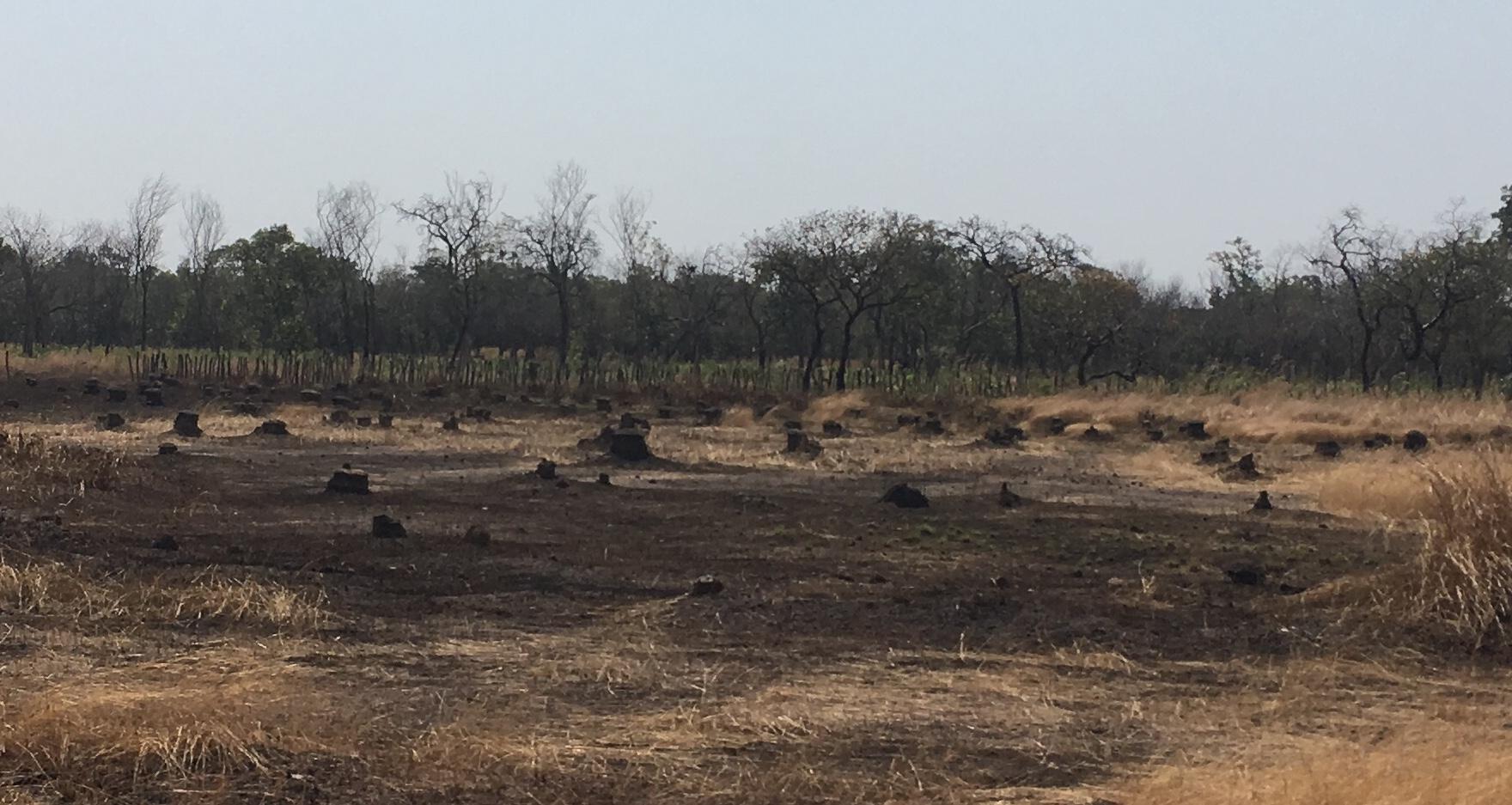 c-deforestation